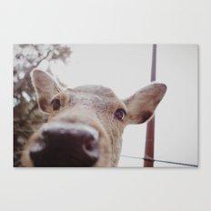 Deer Selfie Canvas Print
