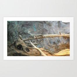 lizzards Art Print
