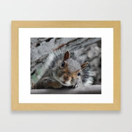 Hello squirrel Framed Art Print