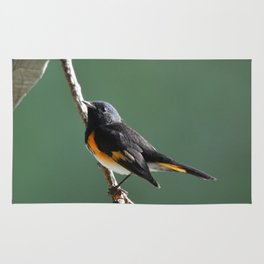 A Male American Redstart Rug