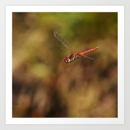 Red dragonfly flying Art Print