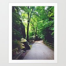 A Woodland Path Art Print