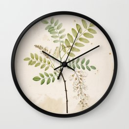 Black Locust Botanical Illustration Wall Clock