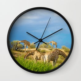 Four Giraffe (Giraffa camelopardalis) feeding. Wall Clock