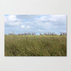 A grass land Canvas Print