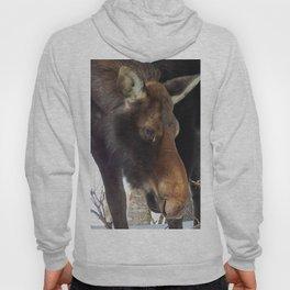 Moose eating saplings Hoody