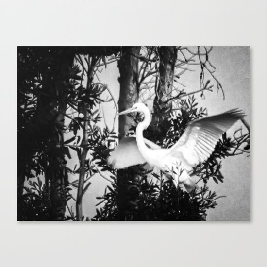 Great Egret In The Trees Canvas Print