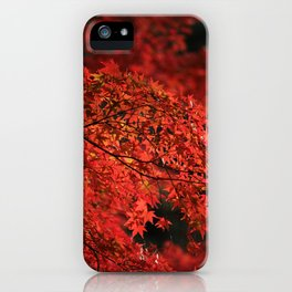 Red Japanese Maple Photography iPhone Case