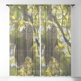 Owl with snake for dinner Sheer Curtain