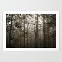 Foggy Woods Art Print