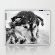 Pumba Laptop & iPad Skin