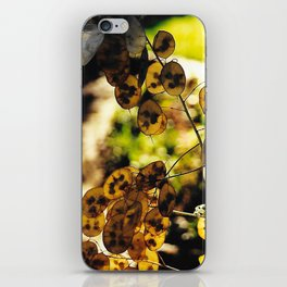 Money Plant in the Sunset iPhone Skin