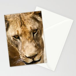 Primary Instinct Stationery Cards