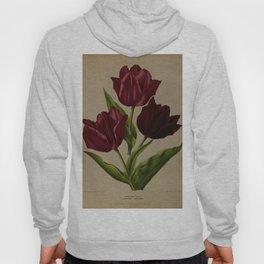 Arendsen, Arentine H. (1836-1915) - Haarlem's Flora 1872 - Single Early Tulips 3 Hoody