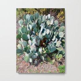 Hey Look At Me I'm A Cactus Metal Print