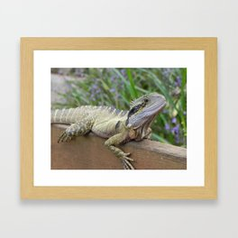 A Lazy Lizard Framed Art Print