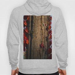 Autumn 05 Hoody