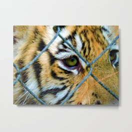 Fenced Fury Metal Print