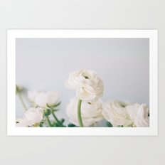 Soft White Ranunculus Art Print