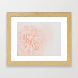 Light Peach Rose #3 #floral #art #society6 Framed Art Print