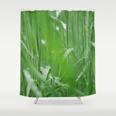 Fresh wild grass covered in dew water droplets. Norfolk, UK. Shower Curtain