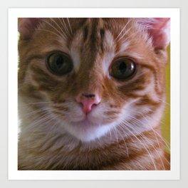 Sunny Cat Art Print