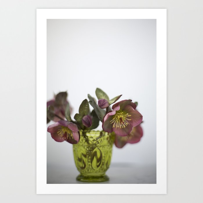 Purple Hellebore Art Print
