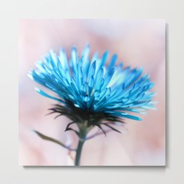 Knapweed blue 221 Metal Print