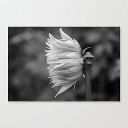 Scorching Love Canvas Print