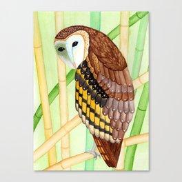 Eastern Grass Owl Canvas Print