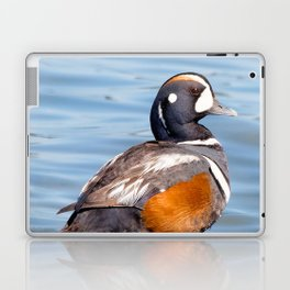 Beautiful Harlequin Duck on the Rocks Laptop & iPad Skin