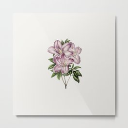 Vintage pink azalea flower  from Biodiversity Heritage Library. Flowers lovers gift. Metal Print