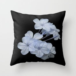 Pale Blue Plumbago Isolated on Black Background Throw Pillow