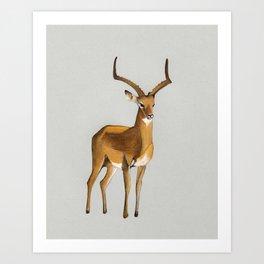 Money antelope Art Print