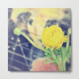 Ranunculus Metal Print