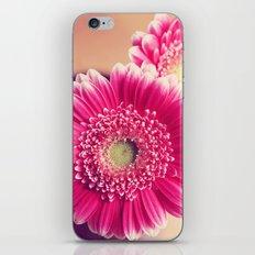 Pink Gerber Daisies  iPhone & iPod Skin