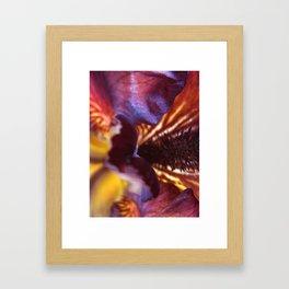 Iris Abstraction #106 Framed Art Print