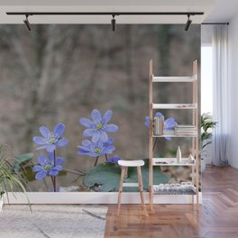 group of spontaneous flowers with lilac petals and white pistils Wall Mural