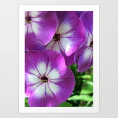 purple color Art Print