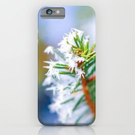 Bitter Cold, Ice On A Spruce Tree Branch iPhone Case