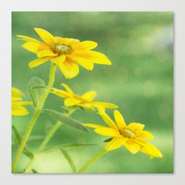 Summer Time With Yellow Daisies Canvas Print