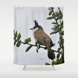 Red-Whiskered Bulbul Shower Curtain