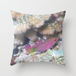 Striped pink and purple fish Throw Pillow
