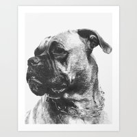 boxer Art Prints featuring Boxer by onlypencil