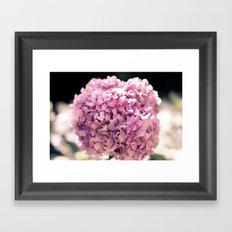 The beautiful hydrangea Framed Art Print
