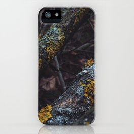 Old wood sleeping in the forest iPhone Case
