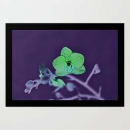 Orchid Arch Art Print