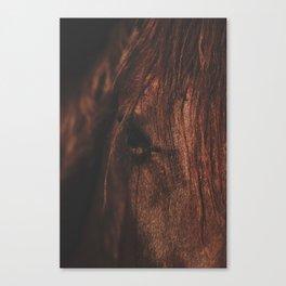 Horse - Sioux Canvas Print