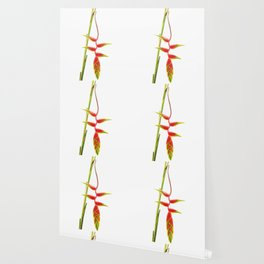 Helionias Tropical Flower white Background Wallpaper