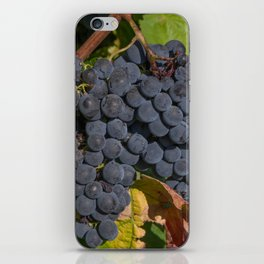 Vineyard Grape Clusters iPhone Skin